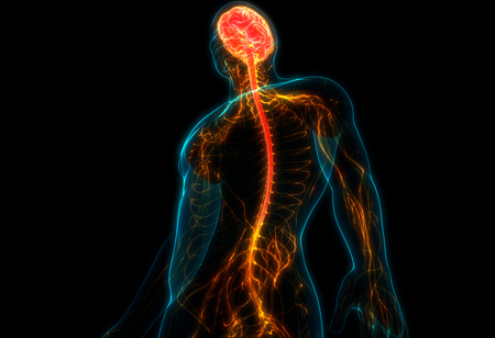 What's New in the Spine Device Market?