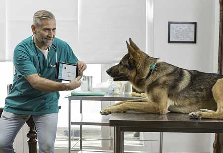 How Will Smart Wearables Drive the Veterinary Industry?